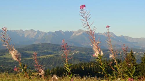 Fireweed and sunrise on the High Tatras