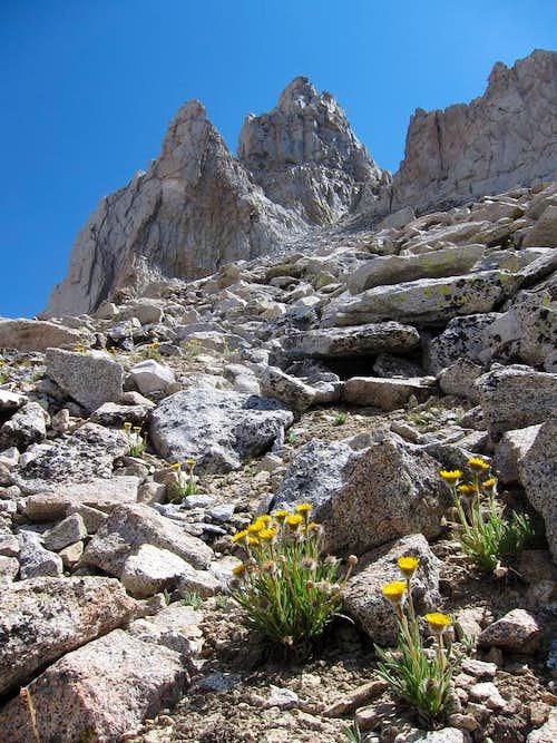 Northeast Chute of Milestone Mountain