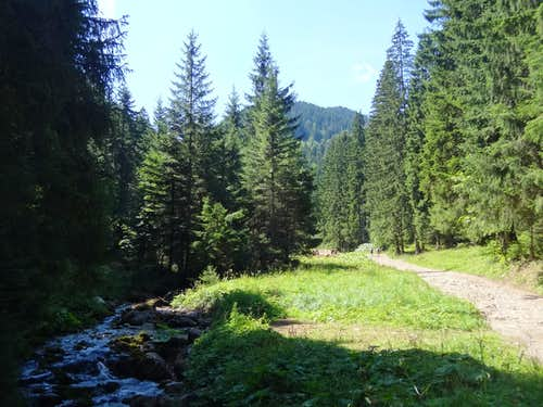 Lower part of Dolina Małej Łaki