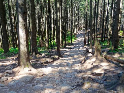 Hiking to Przełęcz w Grzybowcu
