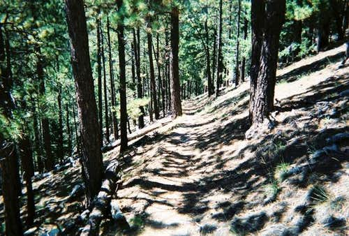 A typical view of the trail...