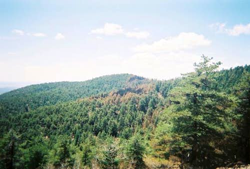 The forest near Gallinas Peak.