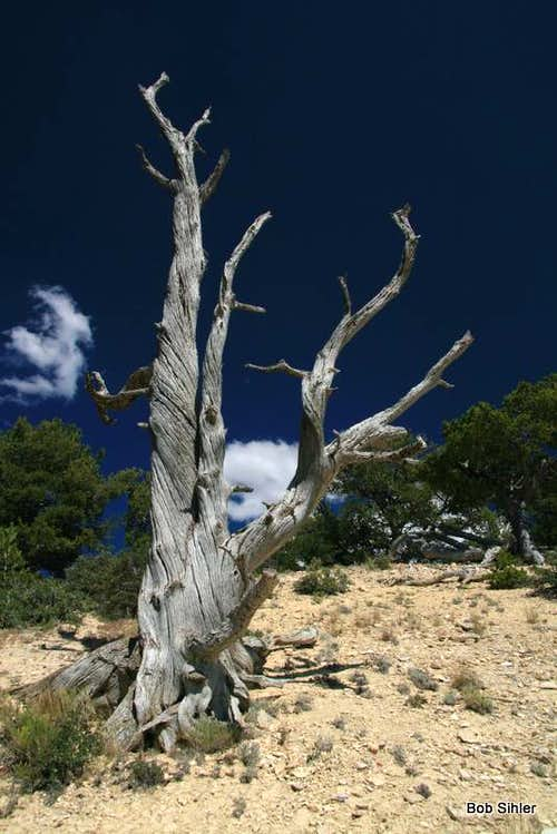 Dead Tree on Cundick Ridge