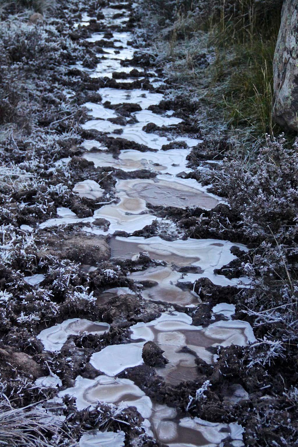Frozen marshy trail