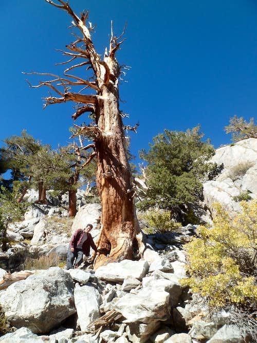 South Fork Big Pine Canyon