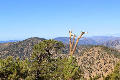 Mount Burnham from Mount Baden-Powell
