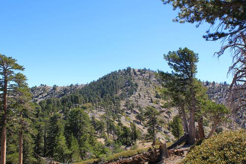 Mount Baden-Powell from west PCT