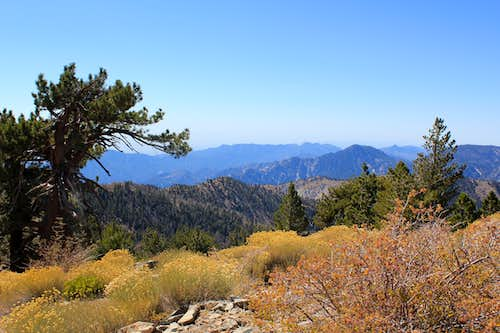 View toward Mount Wilson from Throop Peak