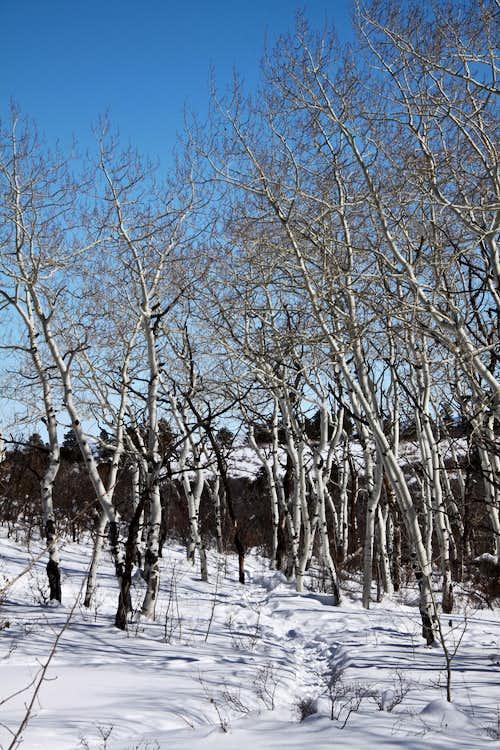 Simms Mesa trail