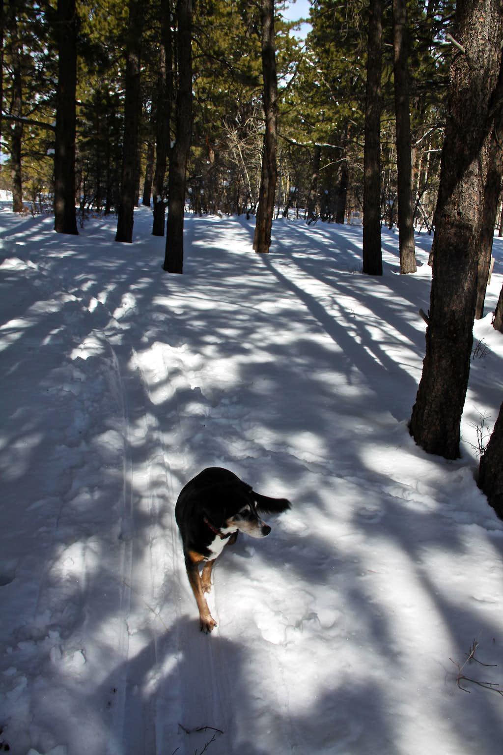Nice winter trails