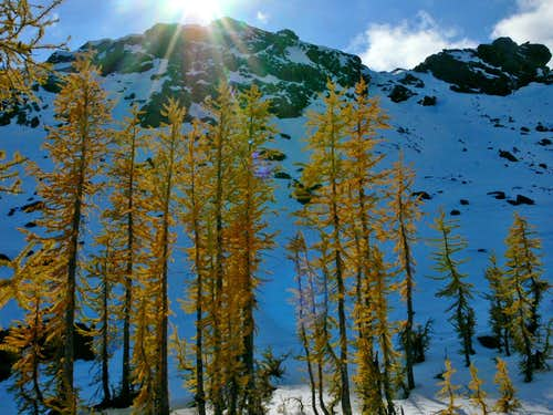 Larches near Ingalls Pass