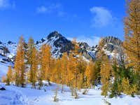 Larches in Headlight Basin
