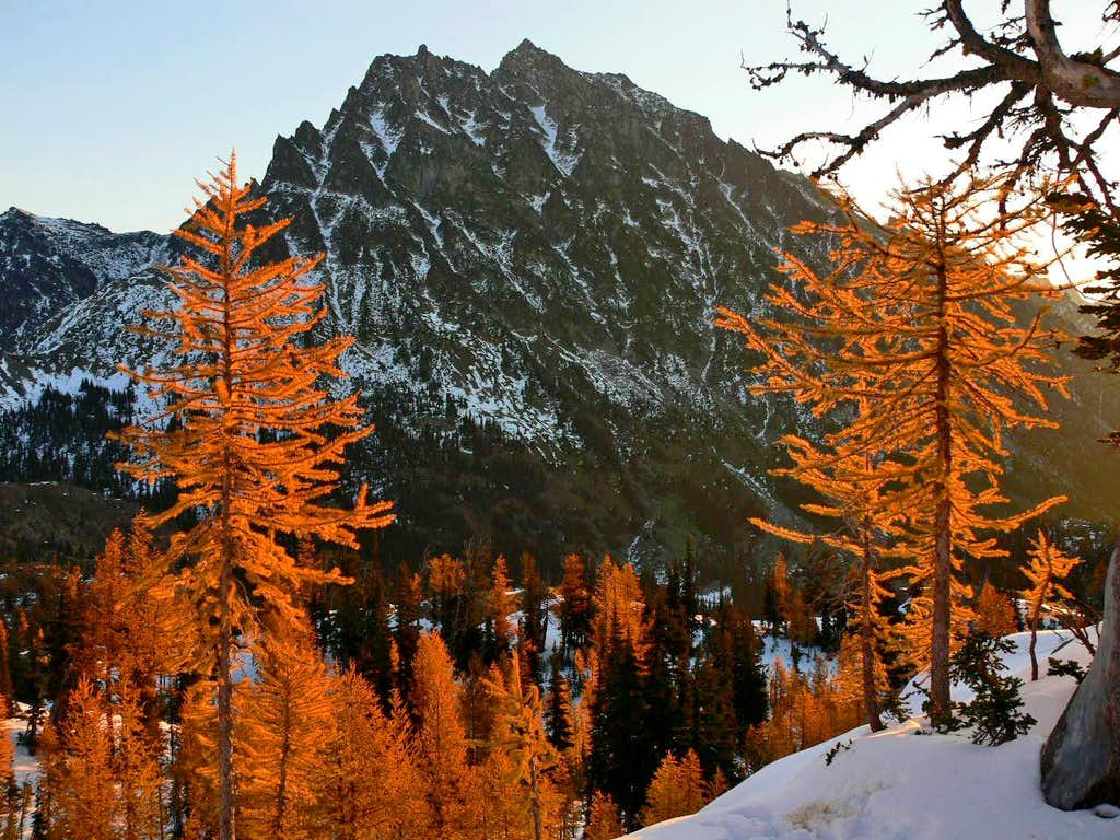 Stuck between a larch and a cold place