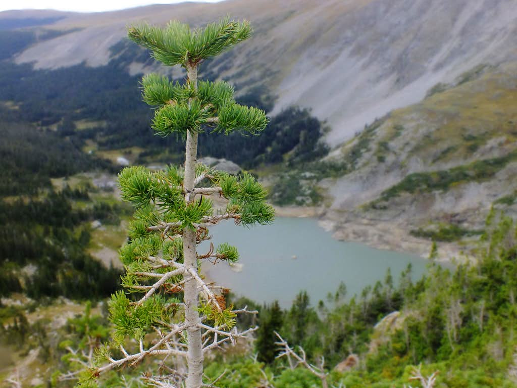 Tree Impeded View of Lake Isabelle