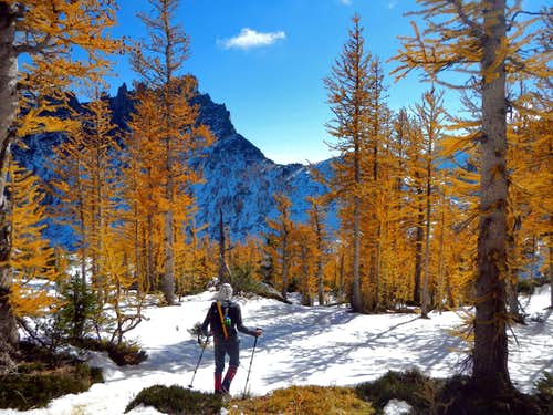 Lovely Larches