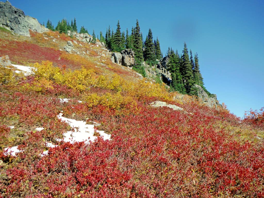 Fall colors high on Alta