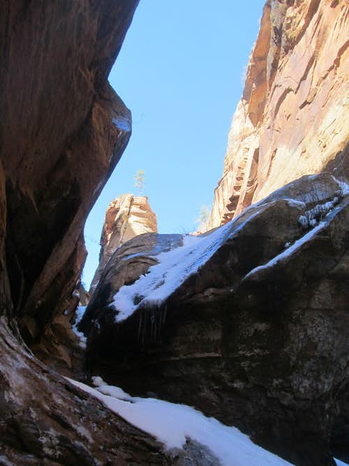 peering up Water Canyon