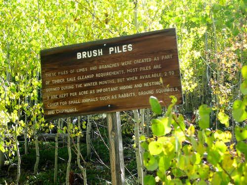 Brush Pile info