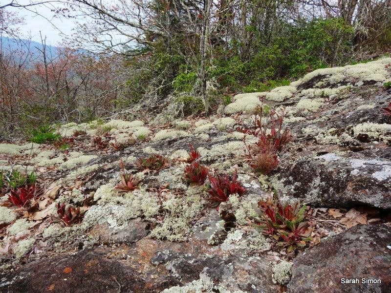 Stuff growing in rocks