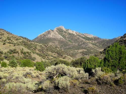 Wildcat Peak (NV)