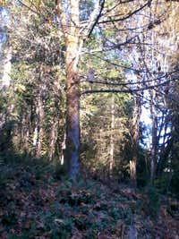owl in Oregon City woods