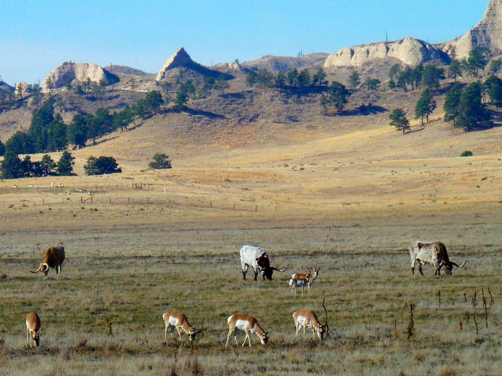 Longhorns and Pronghorns
