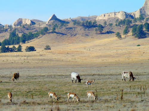 Longhorns and Pronghorns