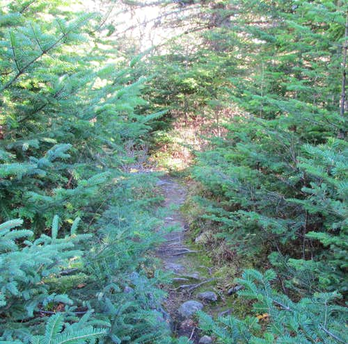 Mount Carleton, Mount Head trail