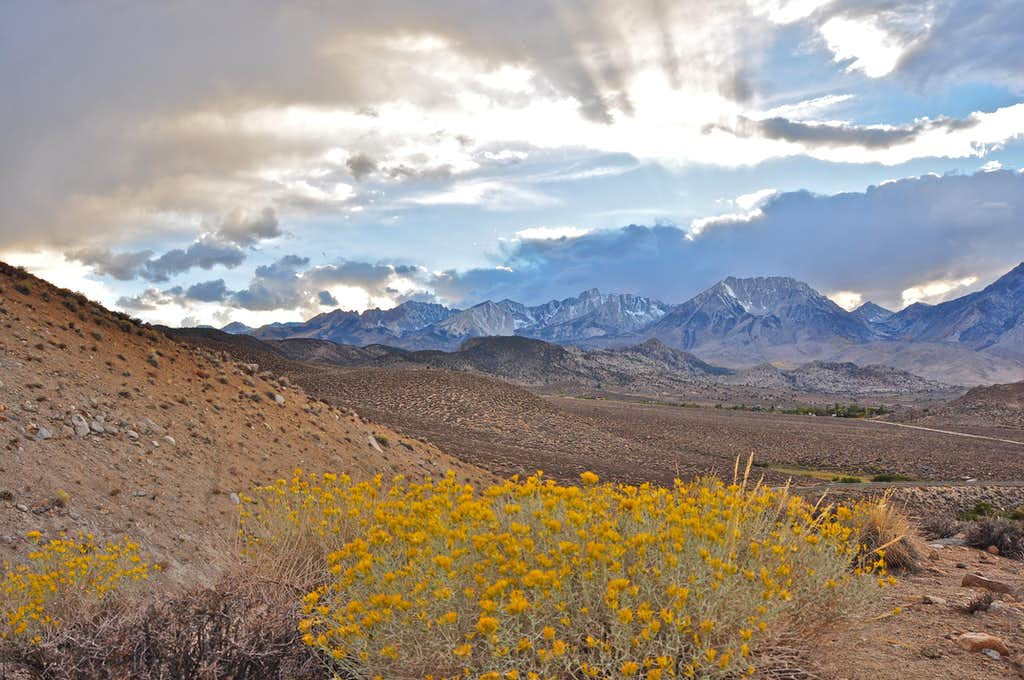 Wildflowers and Basin Mountain
