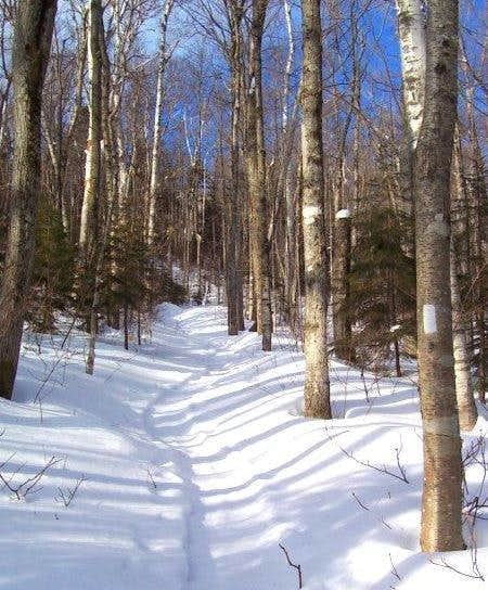 Along the Ethan Pond Trail....