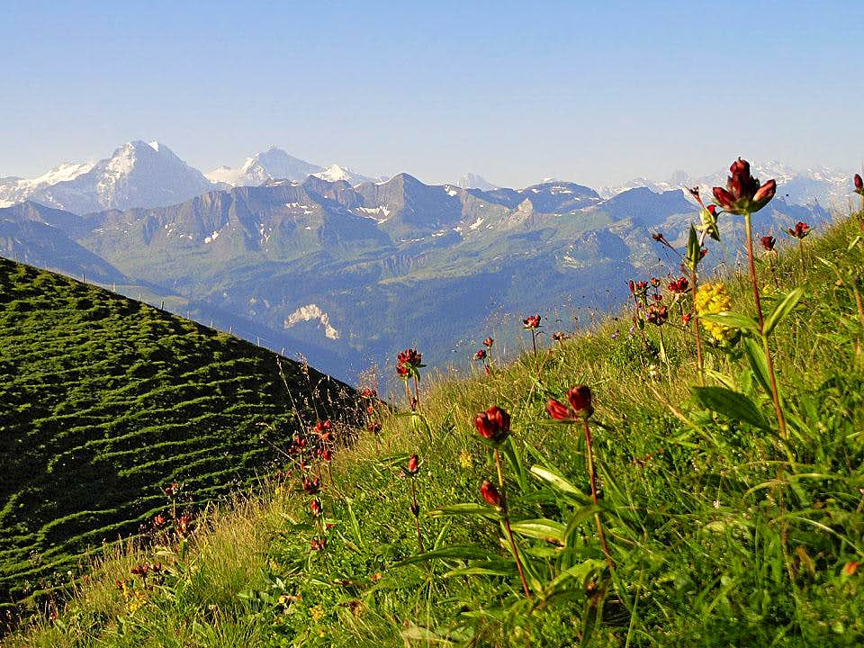 Brienzer Rothorn from the N (by Eisee)