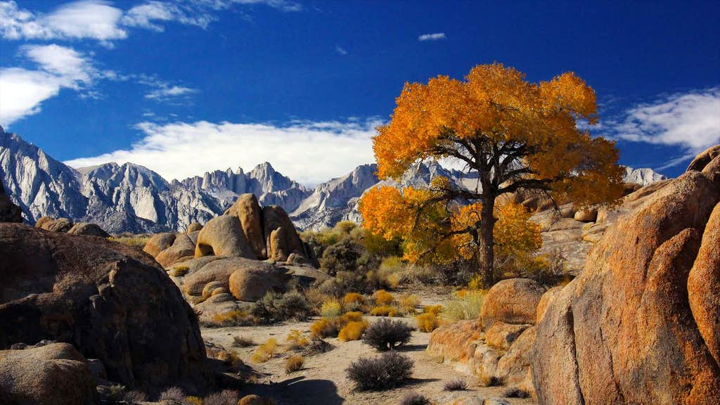Autumn in Alabama Hills (with Mt Whitney behind), CA