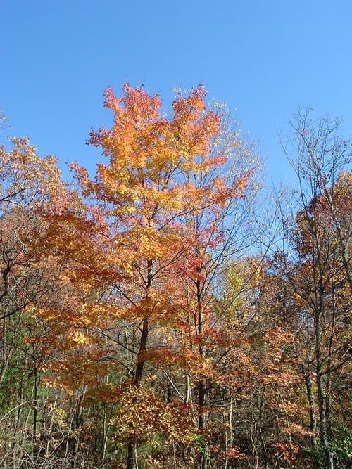 Leaves Turn Orange Near FR 274