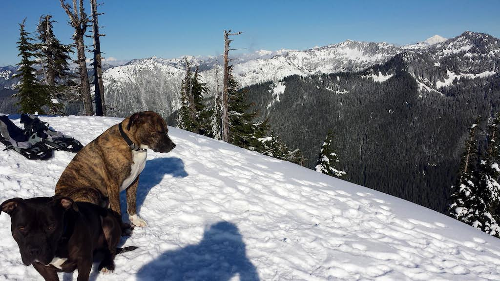 Dogs on Dog Mountain