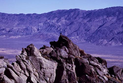 Raven and Owens Valley