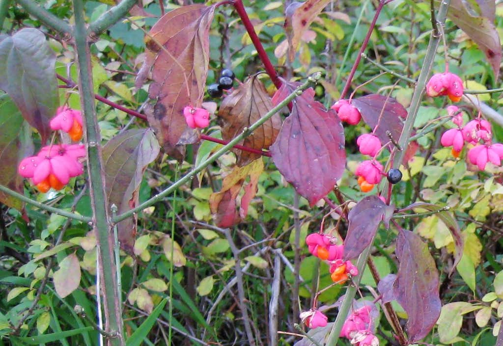Flowers and berries in autumn