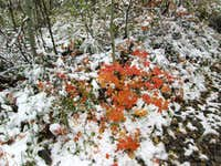 Fall colors highlighted by new snow