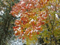 Fall color with new snow