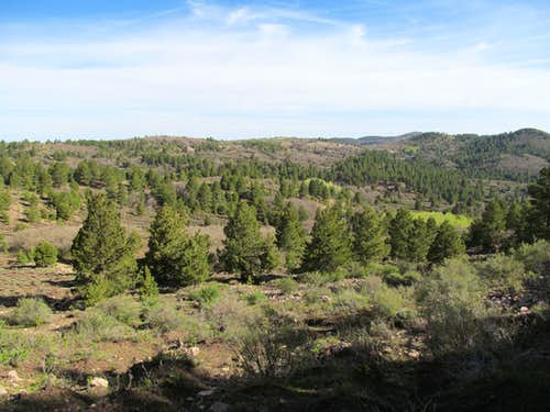wooded landscape of high Carrizos