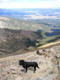 Dog's view from Elbert trail