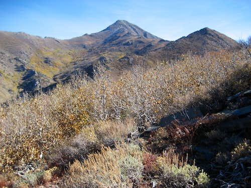West Ridge Santa Rosa Peak - Brushy Terrain