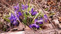 springtime flowers auxier ridge trail