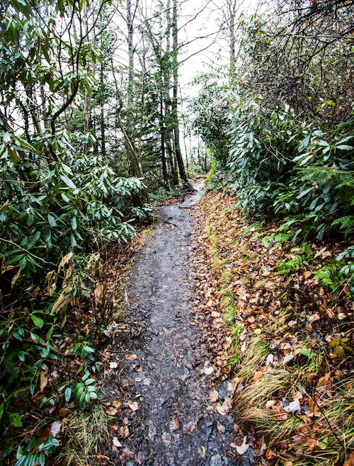 Typical Alum Cave Trail - Rhodo and Mud