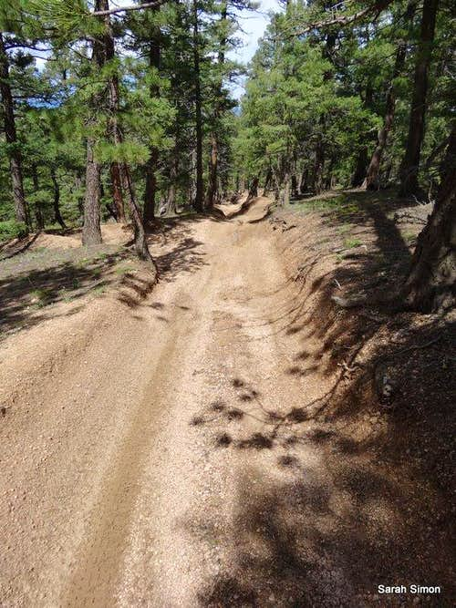 Heavily eroded trail