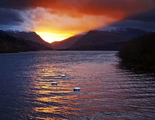 Swans on Lake Padarn