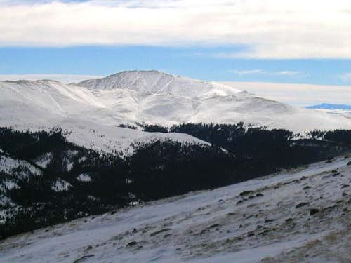 A snow covered Silverheels...