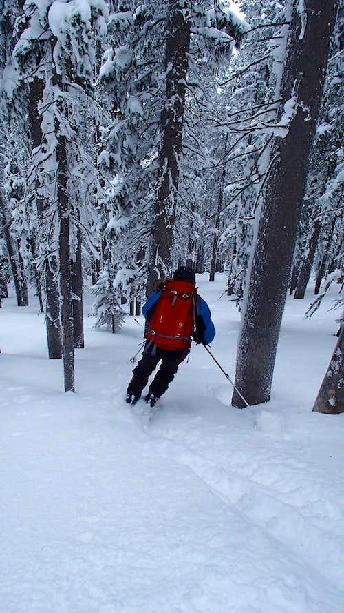 Heaven's Hill Tree Skiing