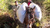 Chirripo Horse