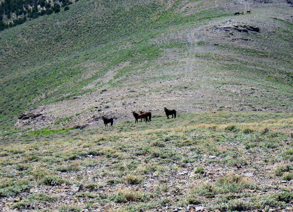 Bald Mountain horses