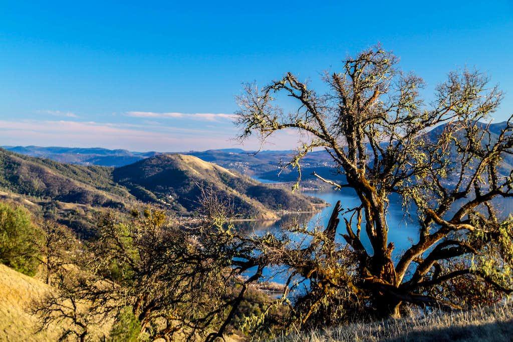 Oak on Hogback Ridge